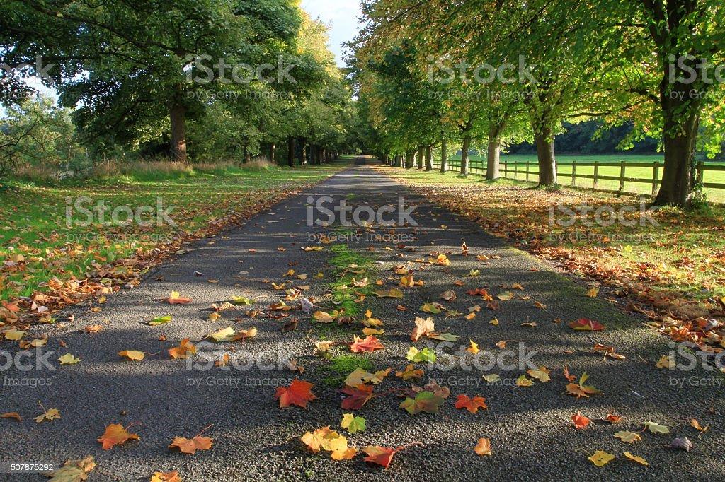 English Countryside Tree Lined Avenue stock photo