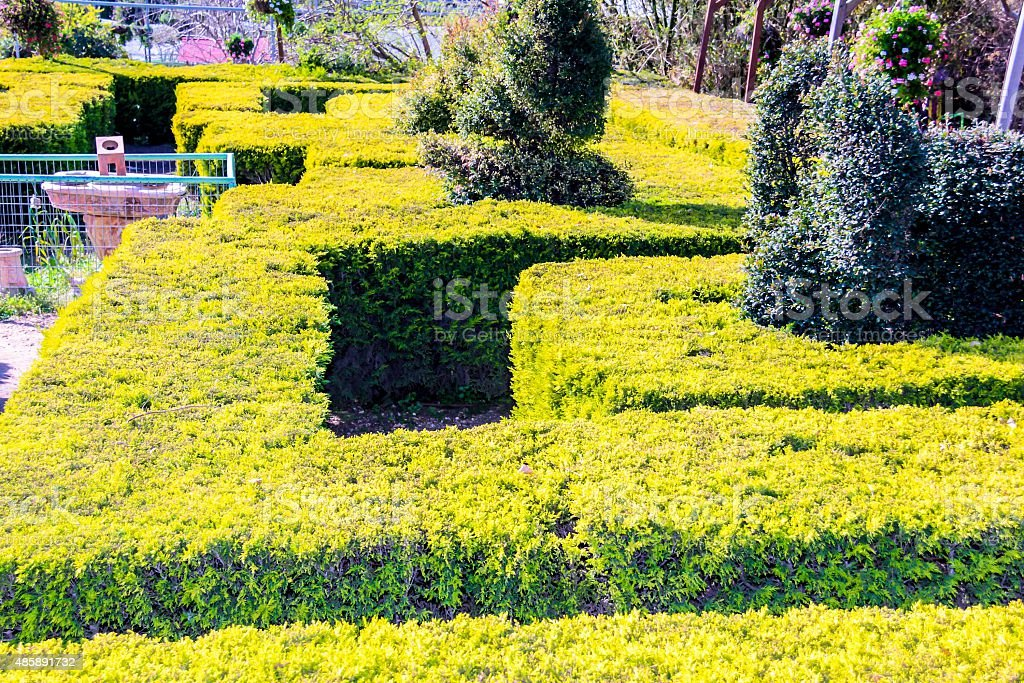 English green labyrinth with a sunny sky stock photo