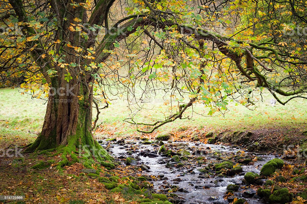 English Lake District: chestnut tree and stream near Grasmere stock photo
