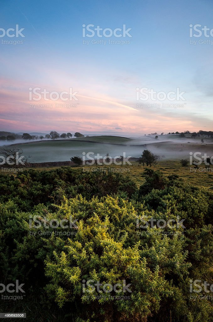 English Lake District: gorse at dusk in autumn (October) stock photo