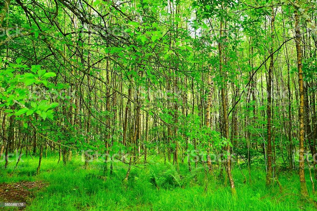 English Landscape stock photo