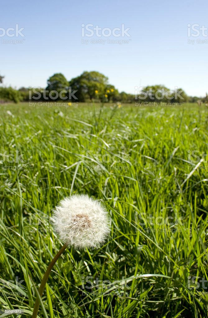 English Meadow royalty-free stock photo