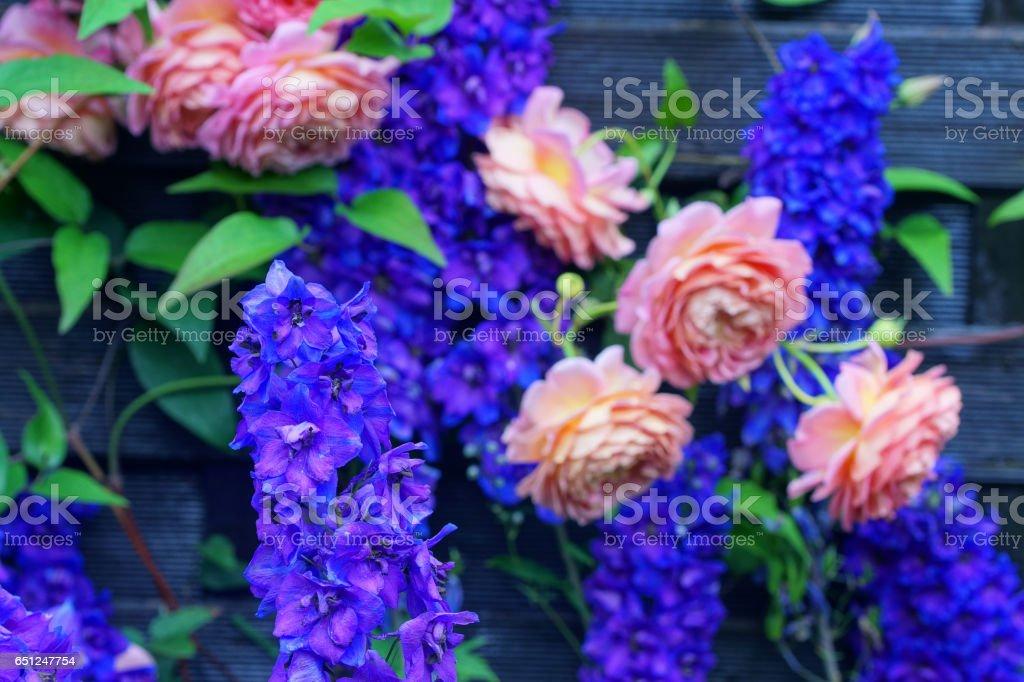 English roses and delphinium stock photo