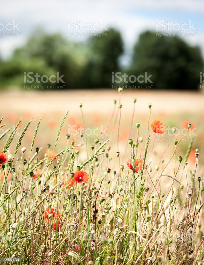 English rural detail stock photo