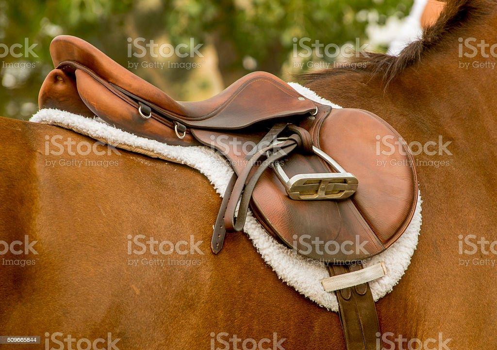English Saddle on a Bay Horse stock photo