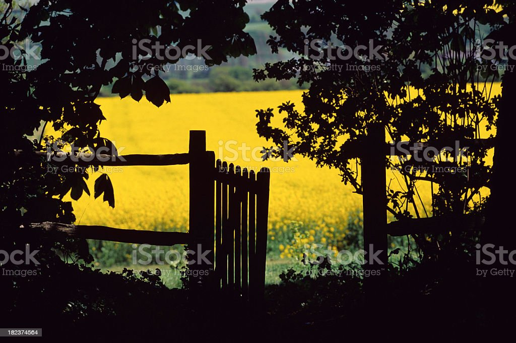 English Summer Scene royalty-free stock photo