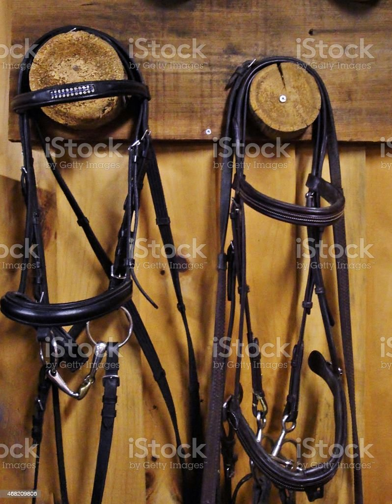 English Tack - Bridles in a tack room stock photo