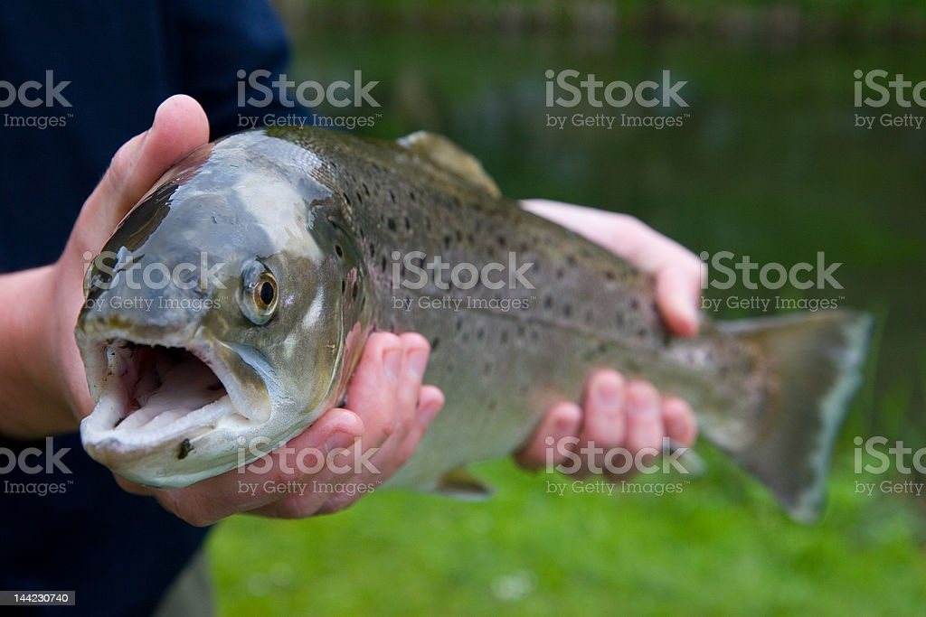 English Trout #1 royalty-free stock photo
