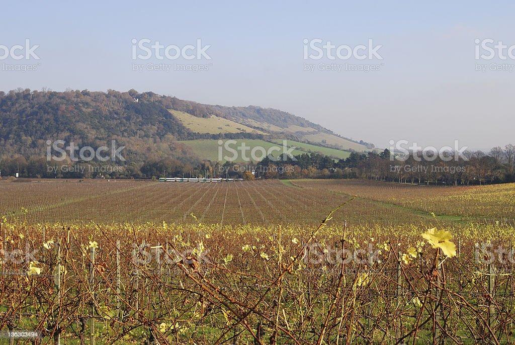 English Vineyard. Late Autumn stock photo