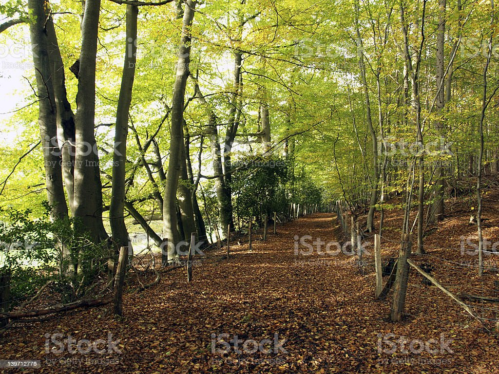english woodland path stock photo