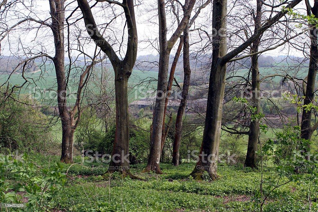 English woodland royalty-free stock photo
