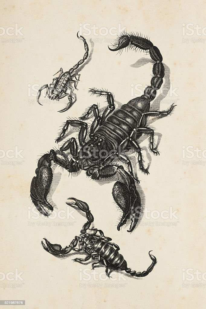 Engraving of scorpion from 1809 stock photo