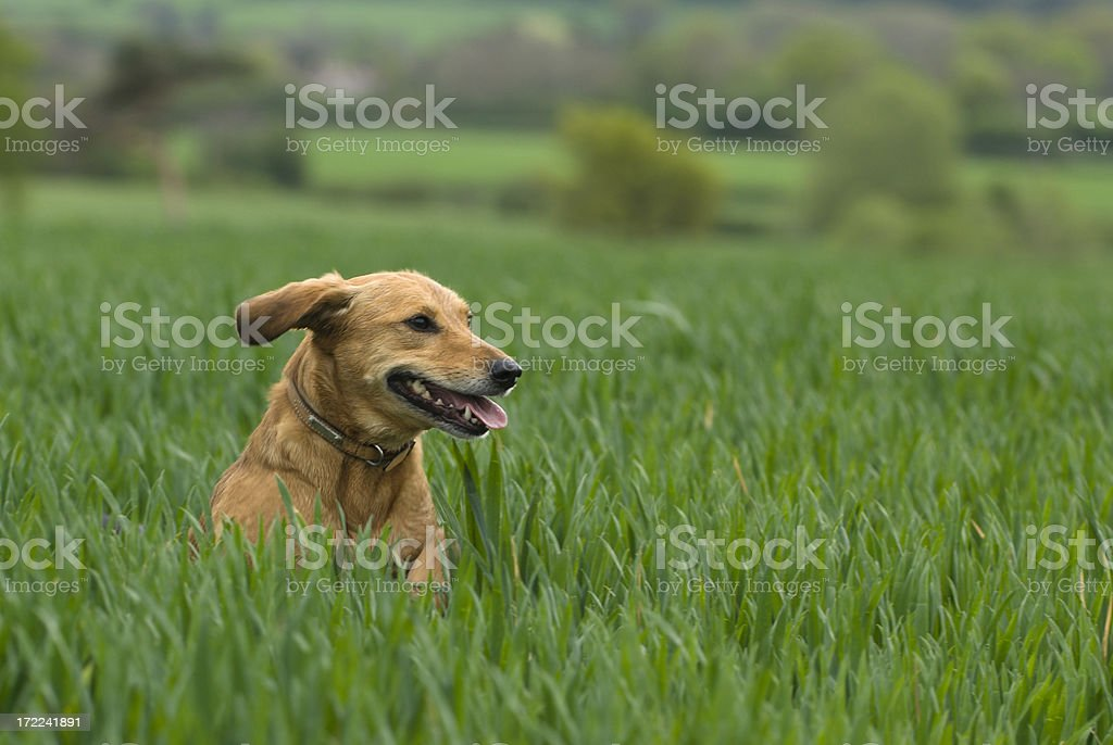 enjoying a run in the country royalty-free stock photo