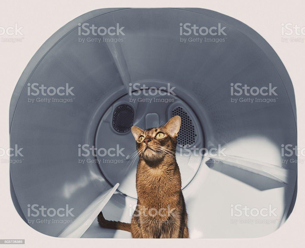 Enjoying a Warm Dryer stock photo