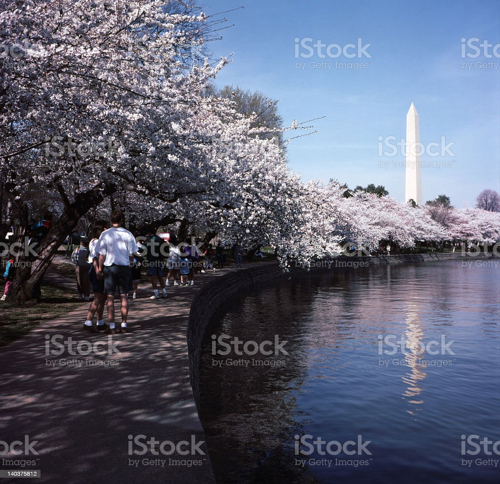 Enjoying the Blossoms stock photo