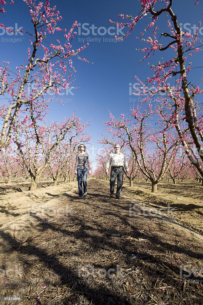Enjoying the Orchard in Bloom stock photo