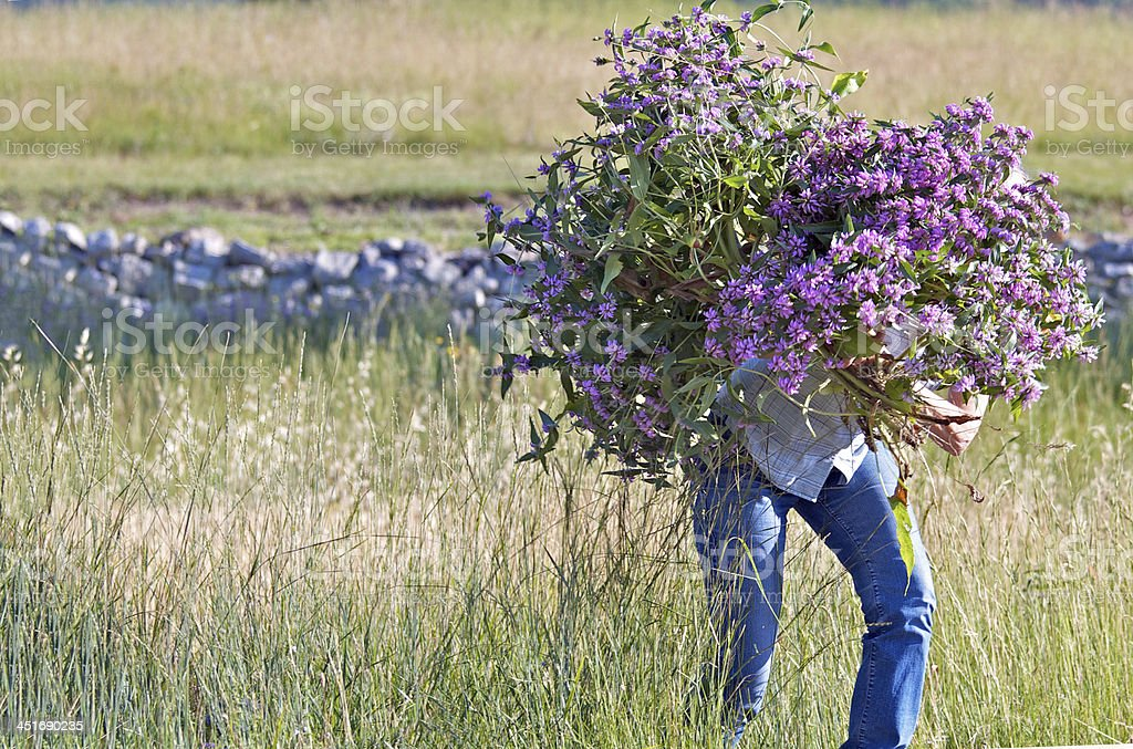 Enormous bouquet of flowers stock photo