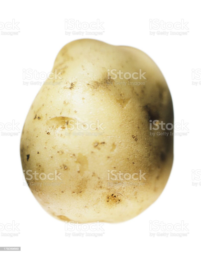 Enormous Potato royalty-free stock photo