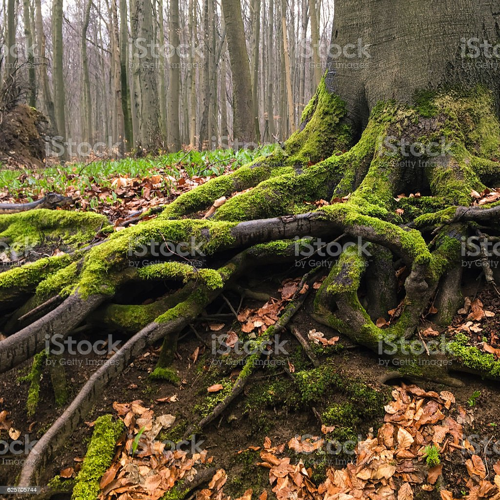 Enrooted stock photo