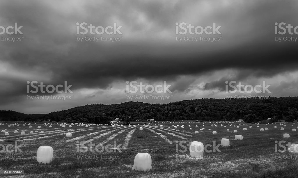 Ensilage balls in black and white image stock photo