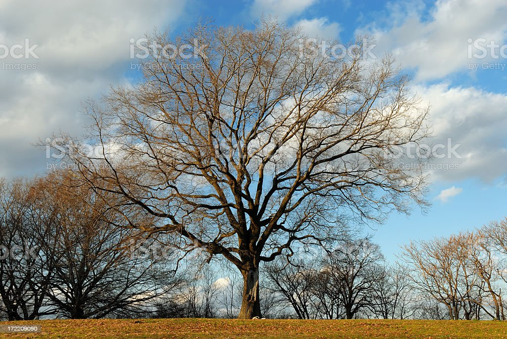 Entangled in Clouds royalty-free stock photo