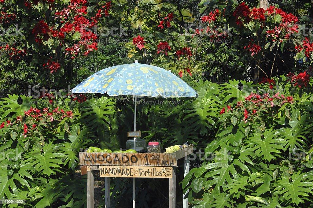 Entepreneurship on Big Island royalty-free stock photo