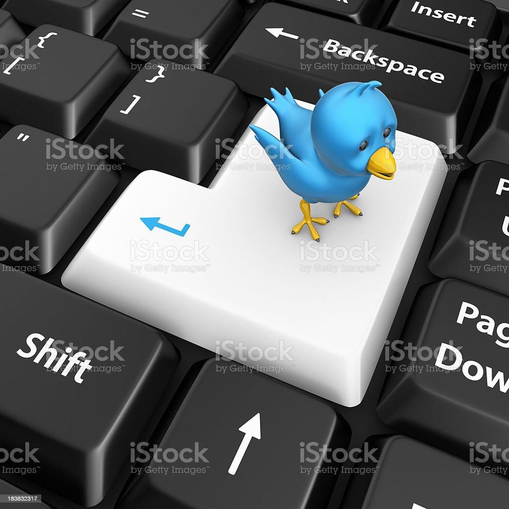 enter key and blue bird stock photo