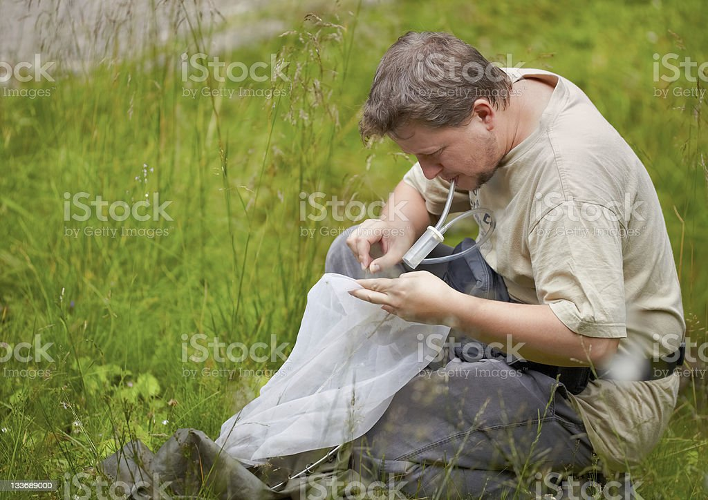 Entomologist in the field stock photo