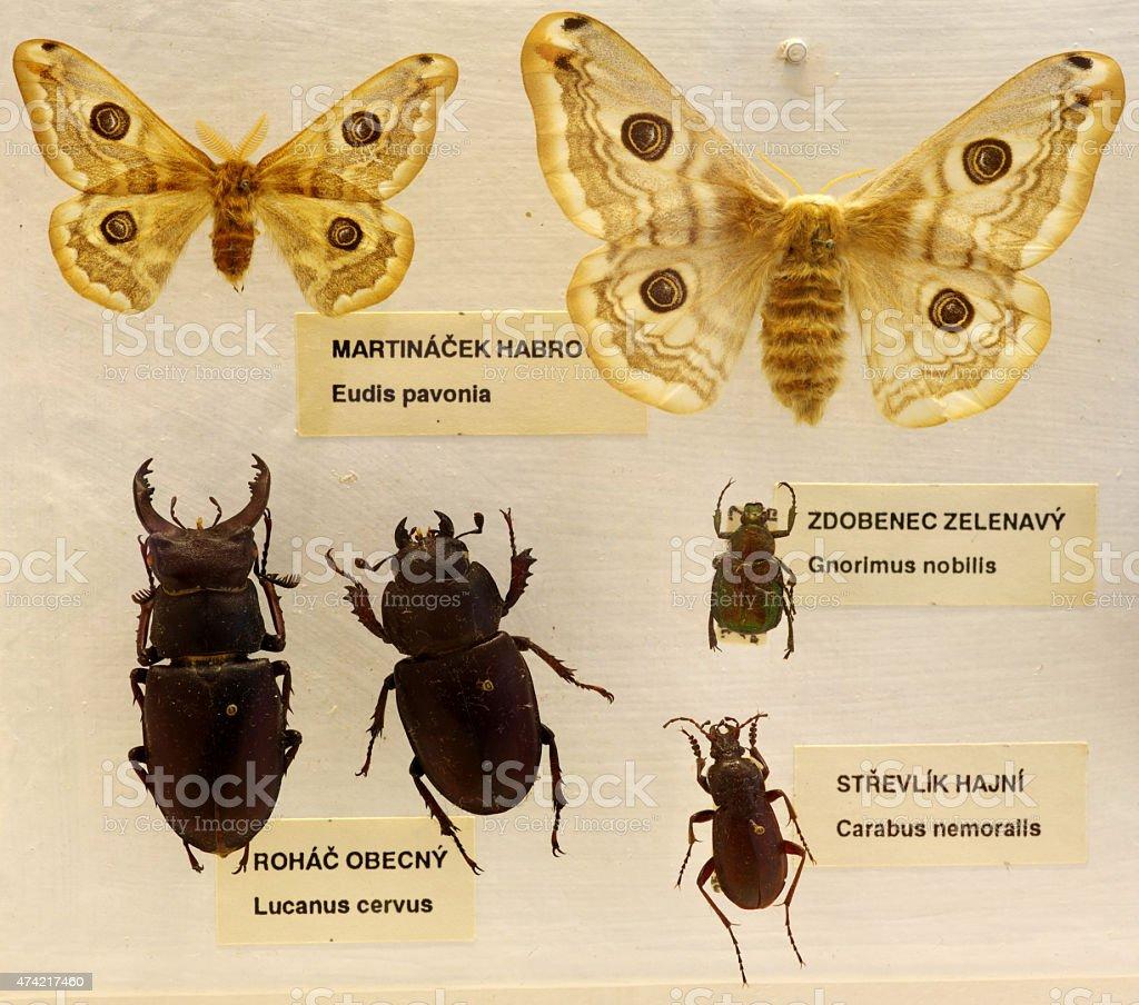 entomology set stock photo
