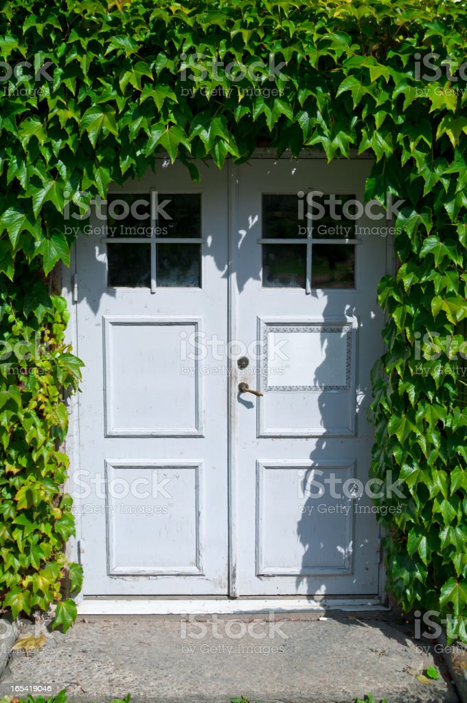 Entrance hidden in Ivy stock photo