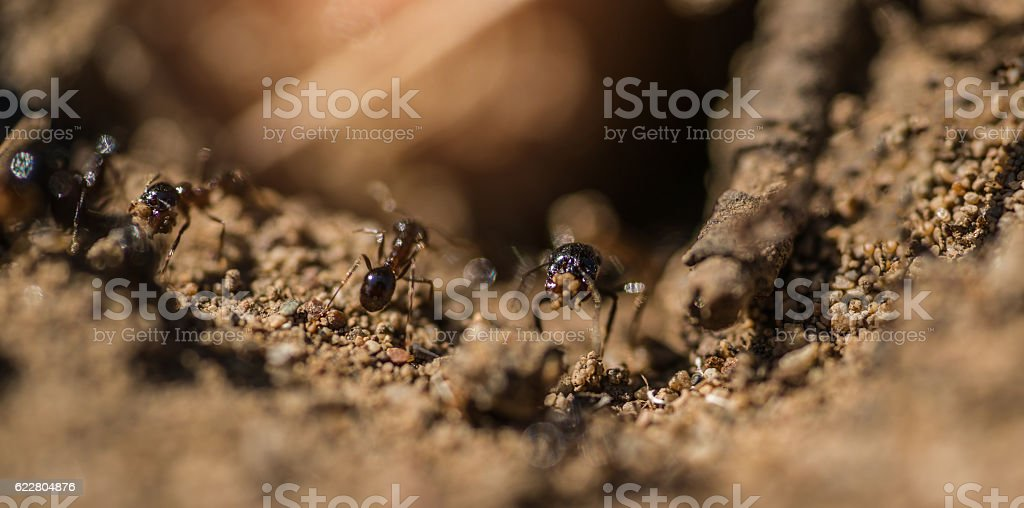 Entrance of the Anthill macro photo ant stock photo