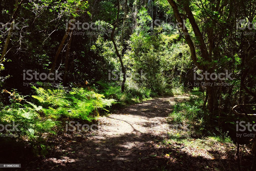 Entrance pathway into South African indigenous forest, Tsitsikamma National Park stock photo