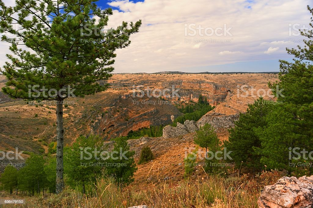 entrenched riverr and vultures nests - foto de stock