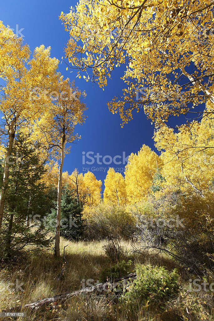 Enveloped in the colors of autumn royalty-free stock photo