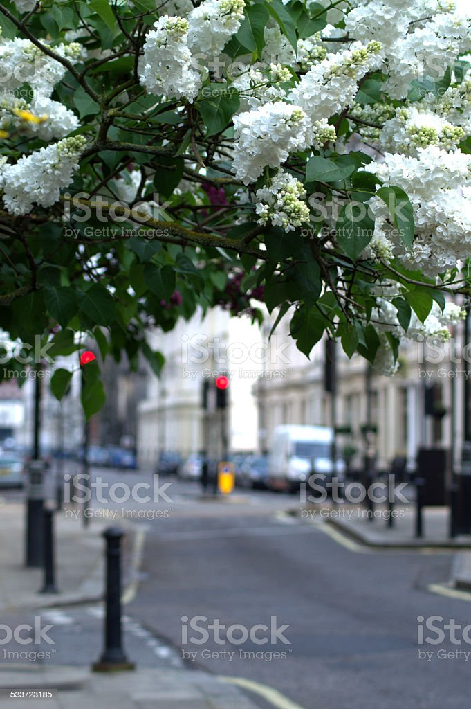 Environment and Urban Spaces stock photo