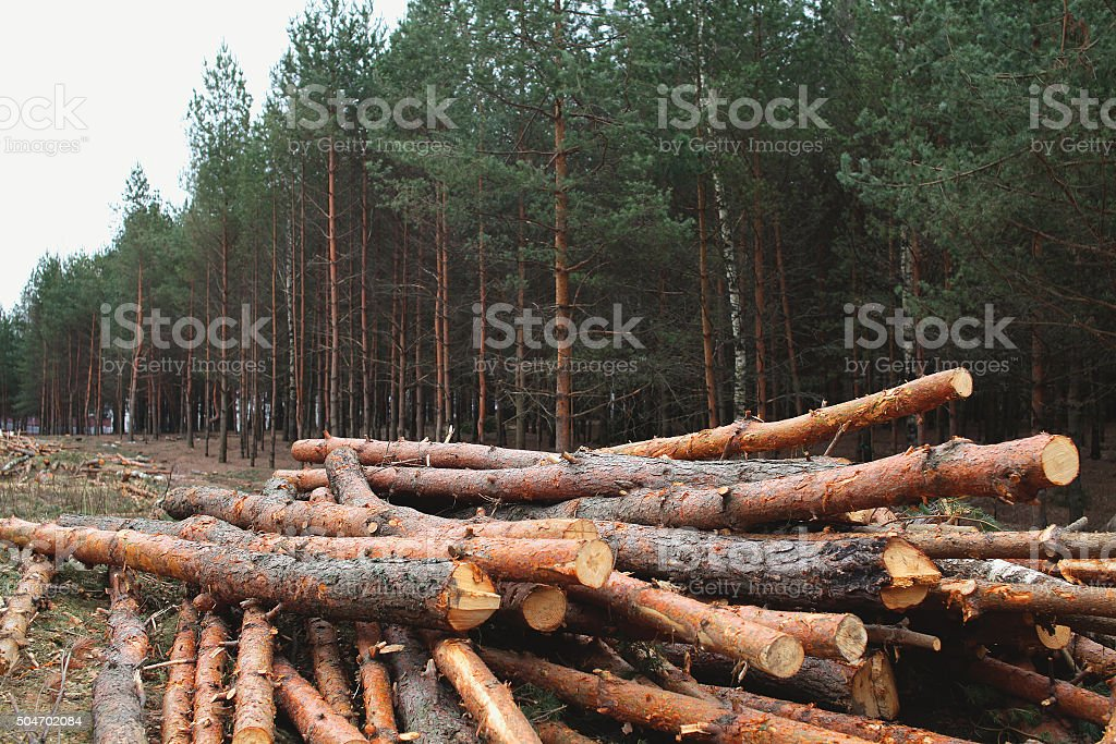 Environment, nature and deforestation forest - felling of trees stock photo