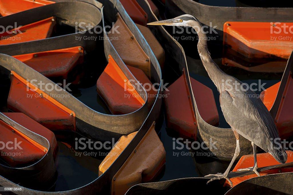 Environmental Concept royalty-free stock photo