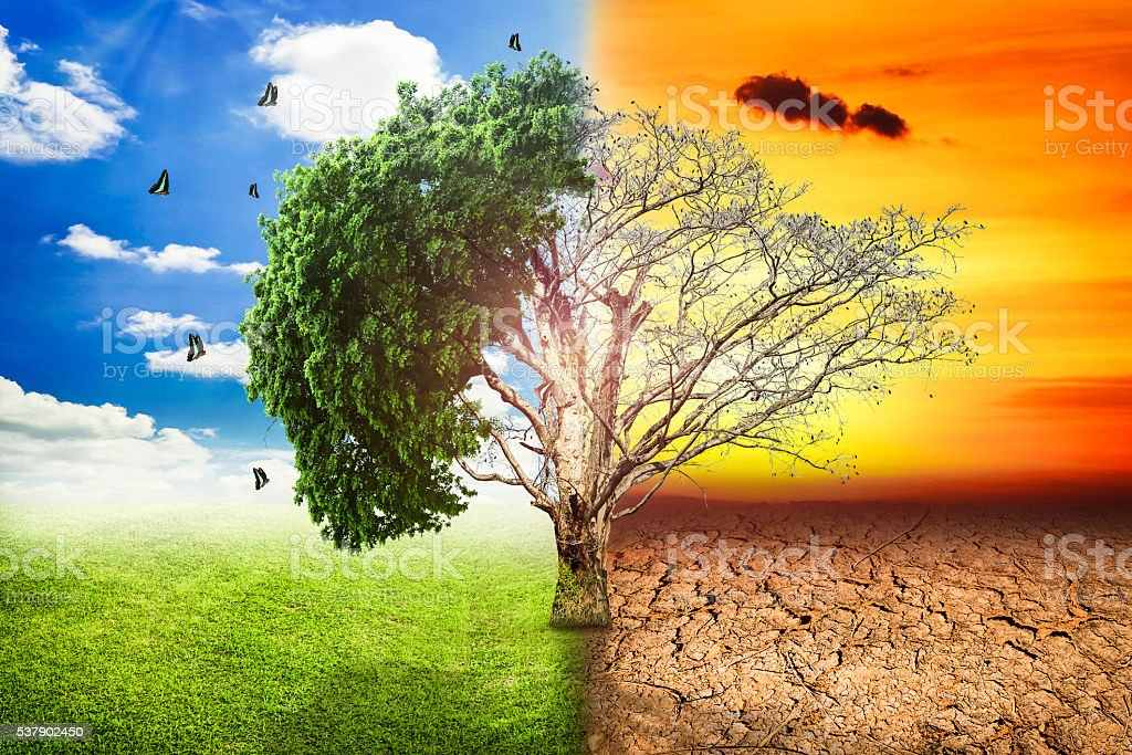 Environmental concepts, Live and dead big tree. stock photo