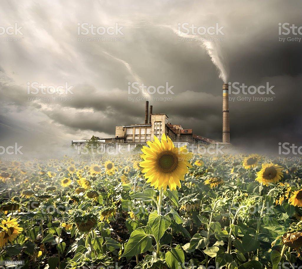 Environmental contamination royalty-free stock photo