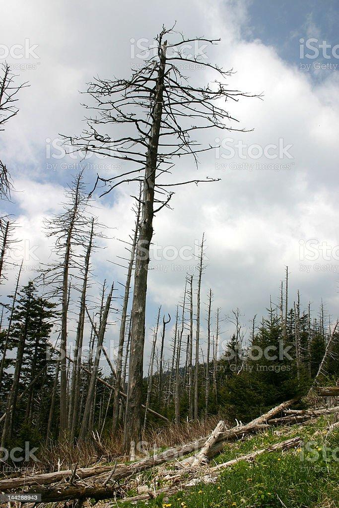 Environmental Crisis royalty-free stock photo
