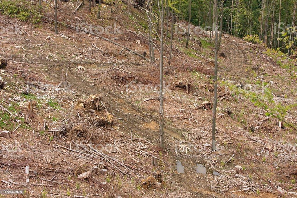 Environmental Damage stock photo