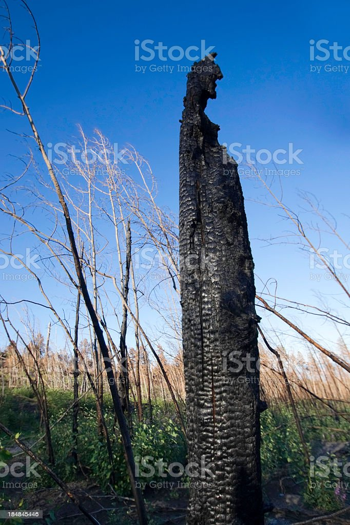 environmental damage royalty-free stock photo
