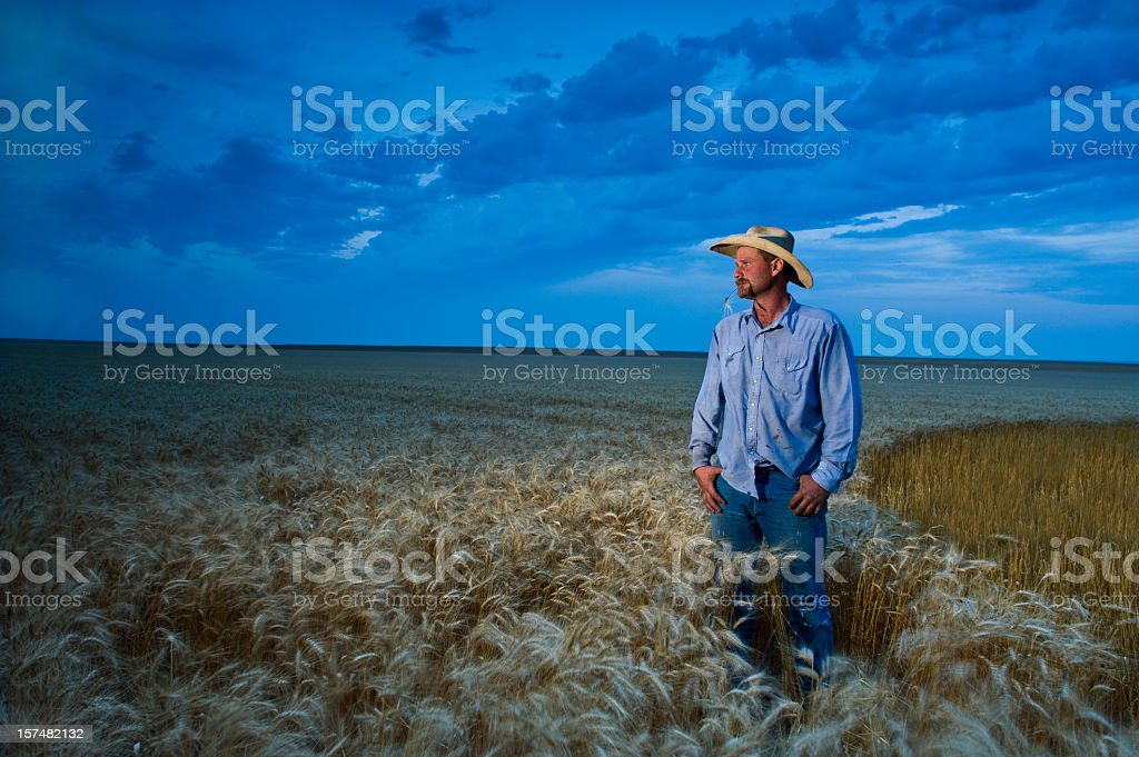 Environmental Portrait American Wheat Farmer in field with dramatic sky stock photo