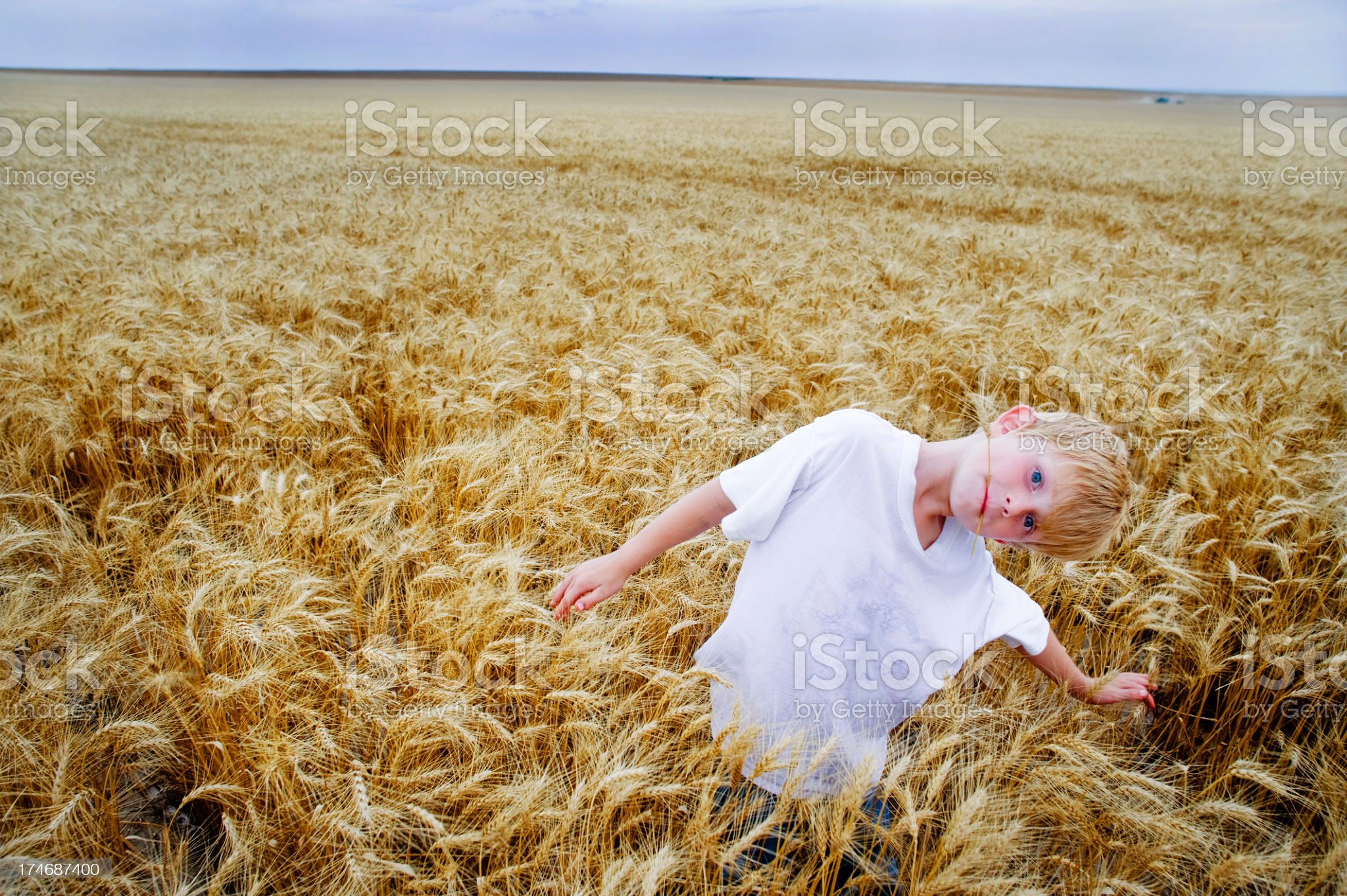 Environmental Portrait of Rural Boy in  Wheat Field at Harvest royalty-free stock photo