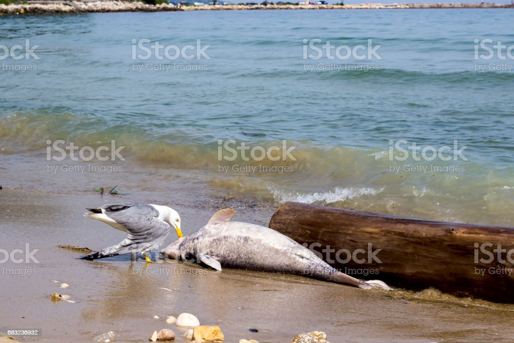 Environmental problem dolphins are dying stock photo