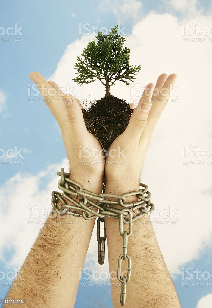 Environmental Success royalty-free stock photo