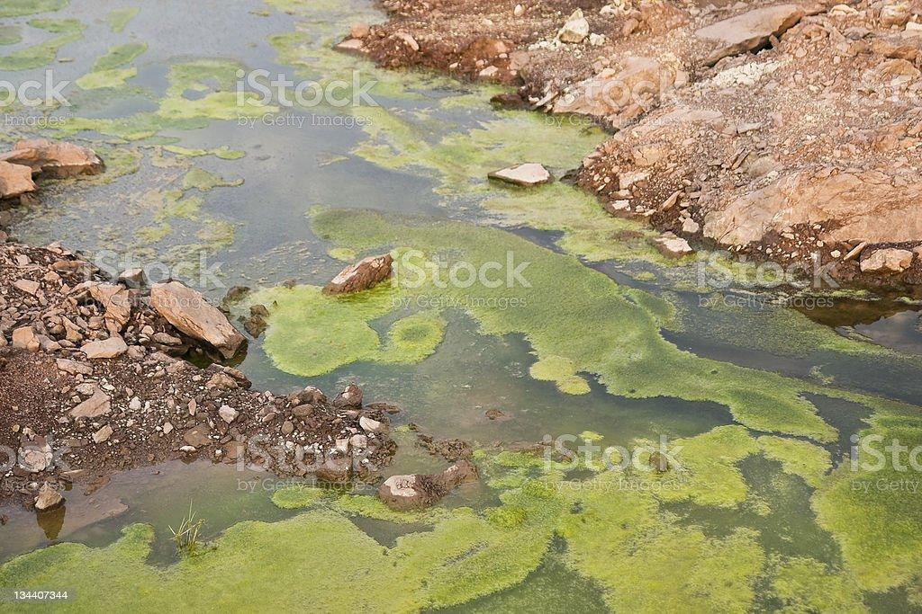 Environment-Algae background stock photo