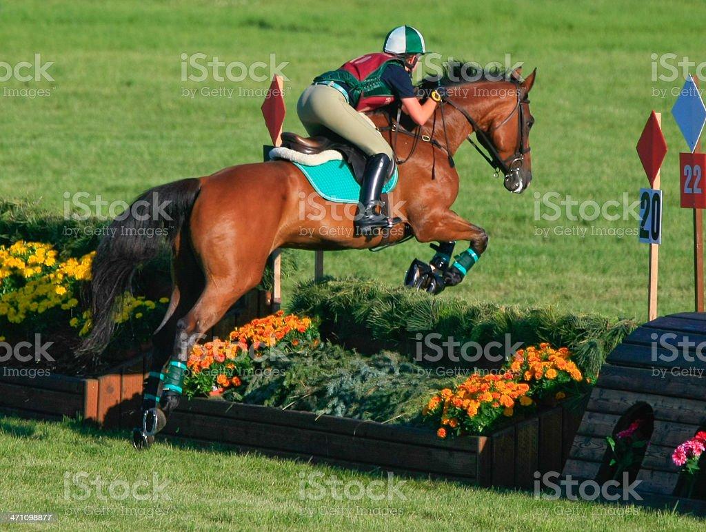 Equestrian Flower Jump stock photo