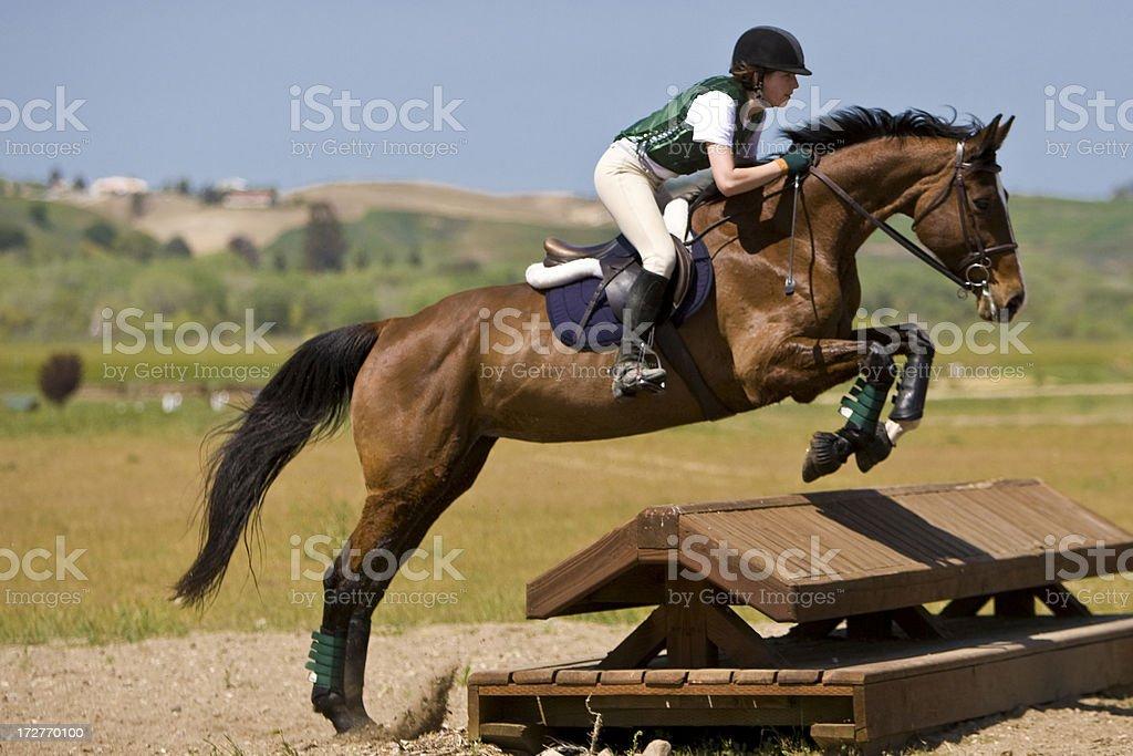 Equestrian Jumper stock photo