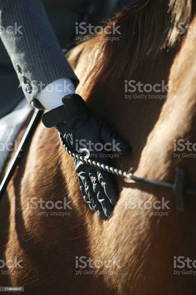 Equestrian Rider petting her horse. stock photo